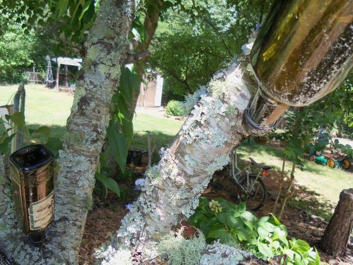 adam and eve uuurrrghh, gardening, outdoor living, Old peach bottle tree