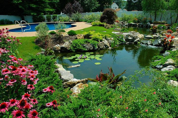Pond and swimming pool. This pond project won an International award from the Association of Pool and Spa Professionals (APSP) Silver medal for waterfeatures. www.deckandpatio.com