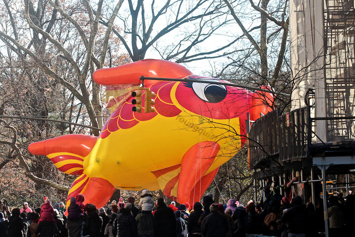"""An unidentified fish """"marches"""" (swims out of water) in Macy's 2013 Thanksgiving Parade. View Four (at CPW).  Image featured @  https://www.facebook.com/media/set/?set=a.582320998483944.1073741851.247917655257615&type=1"""