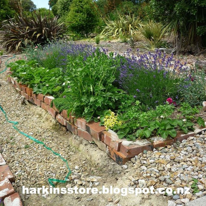 The herb garden, the strawberries are loaded with fruit.
