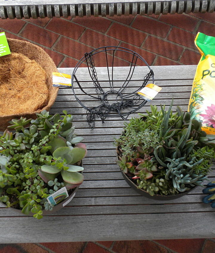 Supplies for succulent orb experiment