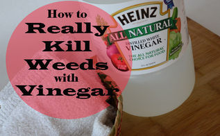 really killing weeds with vinegar, flowers, gardening, Household vinegar will NOT kill weeds Read how to REALLY kill weeds with vinegar