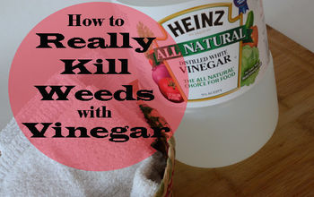 REALLY Killing Weeds With Vinegar