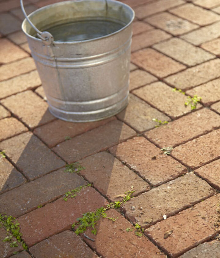 Plant matter can grow between bricks. Make sure to address the root system to prevent them from coming back.
