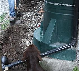 Save Your Lawn How To Build A Flushable Dog Run The Doggie John, Bathroom  Ideas