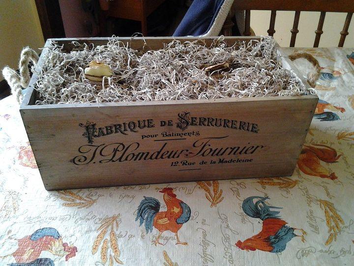 amaryllis gift i won on hometalk hangout, gardening