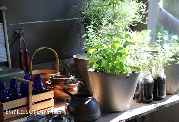 Herb garden on the patio