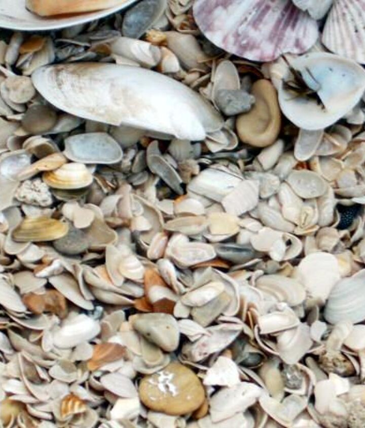 the shells at top are ones I collected on the beach