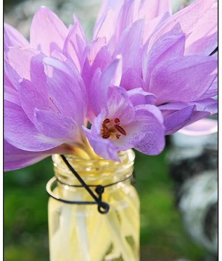 Colchicum are close cousins of autumn crocus and make excellent cut flowers (photo by Matt Mattus via Growing with Plants).