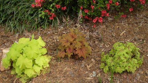 can i divide these plants and plant them or will they not divide well i only planted, gardening, planted last fall