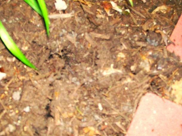 burrowing animal, flowers, gardening, pets animals
