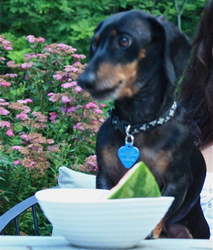 everyone should enjoy the garden emmitt enjoying the last days of summer, outdoor living, patio, pets animals