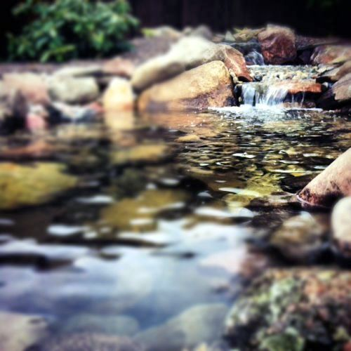 This is an artistic shot of the ecosystem pond and waterfall in Chelsea MI. that was taken by the homeowners teenager.  They weren't sure their teen knew they had a backyard!