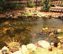 this is a project to bring a customers back yard to be their home paradise that i am, decks, doors, landscape, outdoor living, ponds water features, porches, Viewing the pond at this angle you can see an air wall that we have installed to help with the aeration along with a view of one of the upbog waterfalls and one of the sunning rocks for the turtles