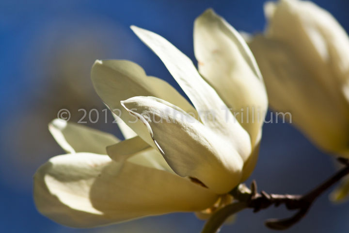 photos from atlanta botanical garden march 2012, gardening