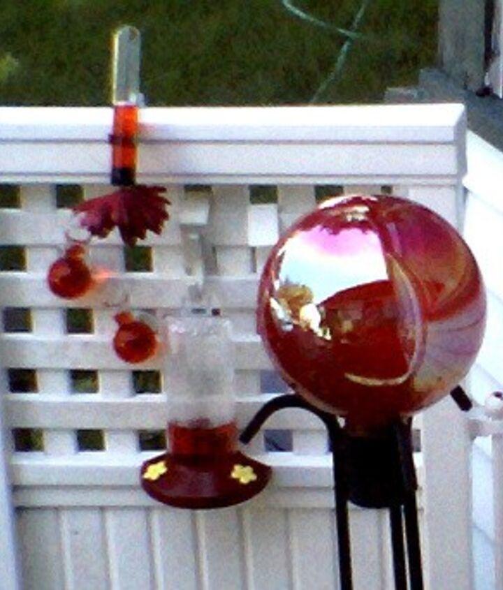 First year Humming bird feeding station,