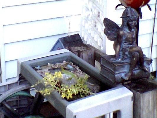 Mini bird bath at top a mount house reel.