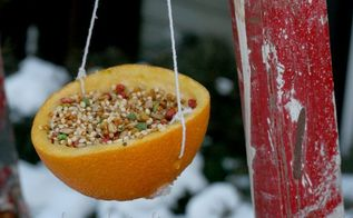 easy to make bird feeders amp bird treats, gardening, Bird Feeder hanging from my little red ladder