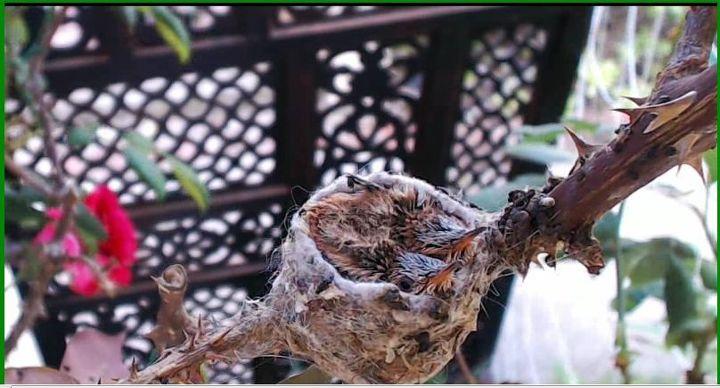 oy vey i just found a hummingbird webcam, pets animals