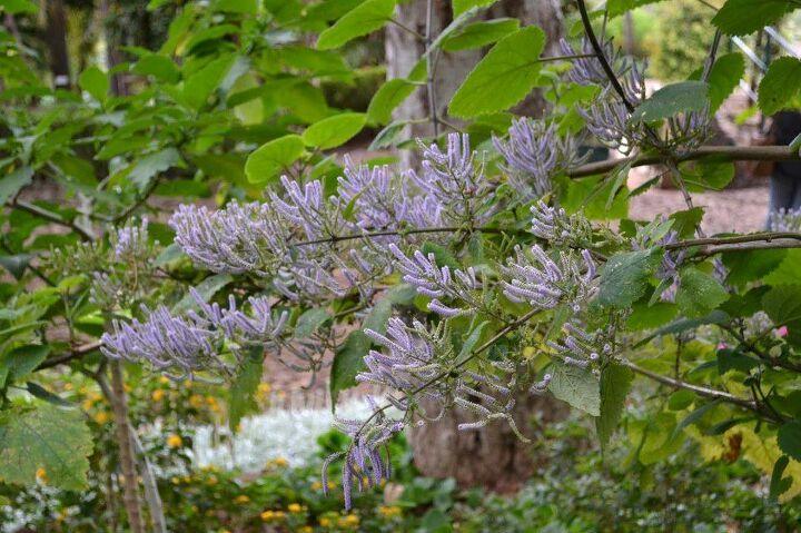 can anyone identify this flowering bush, flowers, gardening