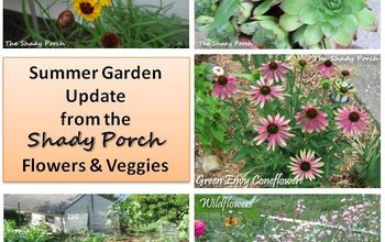 Summer Garden - New Blooms and Veggies!
