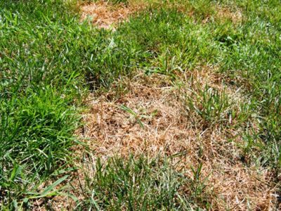 """keep burned grass to a minimum with designated """"potty"""" areas"""