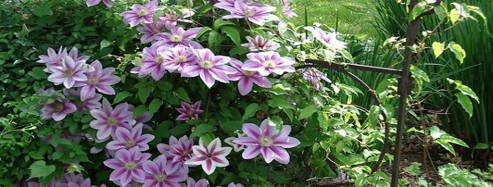 can anyone id this flower plant, flowers, gardening, What is this flower plant