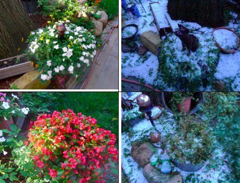 oh hail, gardening, outdoor living