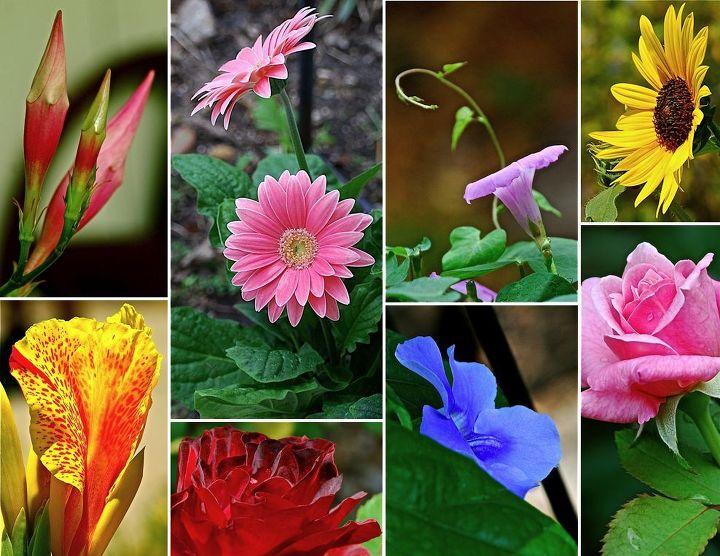 garden blessings, gardening