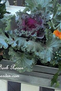 easy fall window boxes, gardening, For the First Day of Fall switched out the IKEA window boxes hanging on the gazebo with tiny mums flowering kale and kept the scaevola Quick and easy change season http pinterest com barbrosen our fairfield garden
