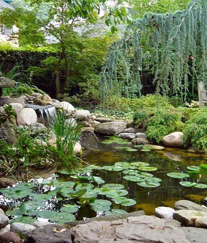 Koi Pond Replace by Acorn of Rochester NY