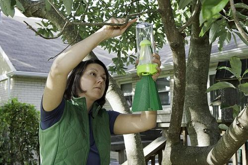 don t let stink bugs make you a fool this april, pest control