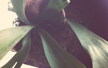 Sustainable Saturday: DIY Staghorn Fern Mount