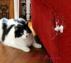 get rid of cat pee smell out of carpet