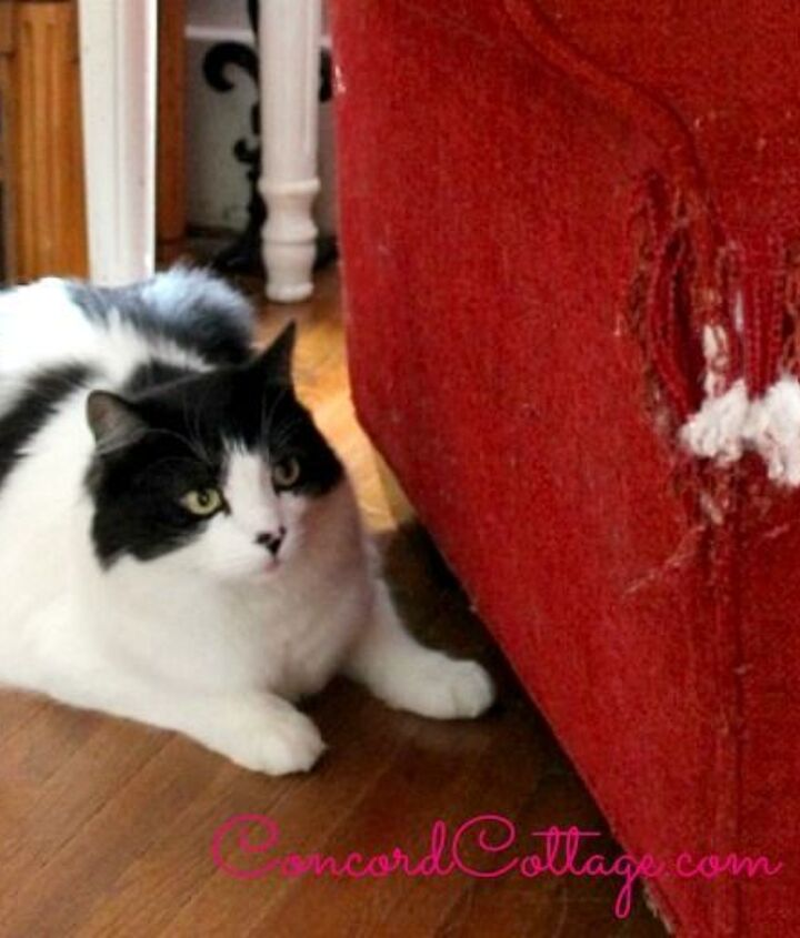 How To Repair A Cat Scratched Chair Or Sofa Diy Hometalk