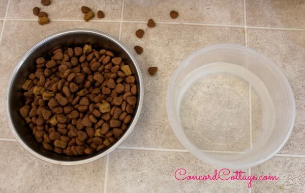 how to make a dog food placemat, crafts, pets animals