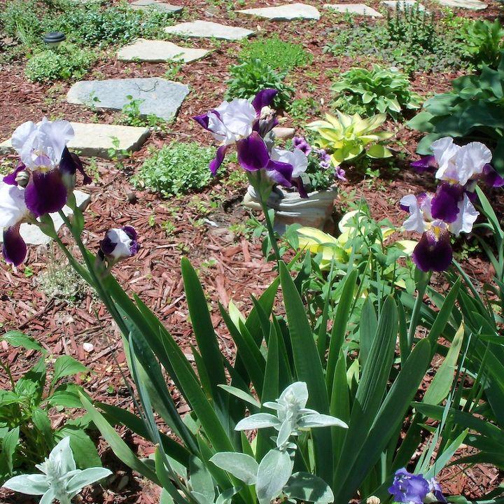 tour of my secret garden one year later, flowers, gardening, landscape, perennial, raised garden beds