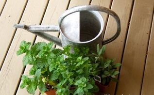 potted herb plants, container gardening, gardening, Nurseries have a great selection of herbs