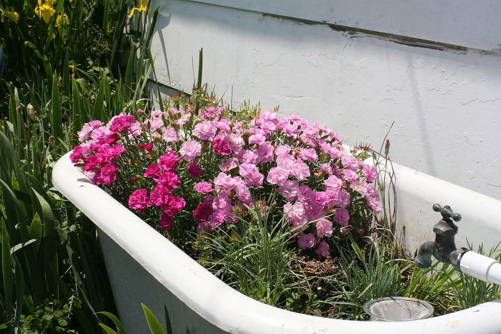 tub of pink carnations, flowers, gardening, repurposing upcycling
