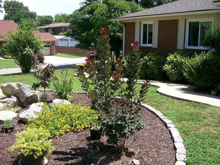 leggy smoke bush, gardening, landscape
