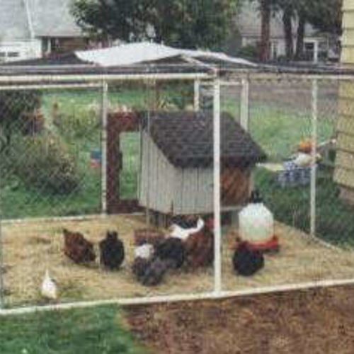 Looking For Ideas For Building Chicken Coop For About 50