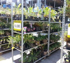 Plants Buying Tips Lowes Homedepot, Gardening