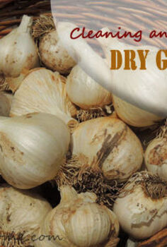 garlic cleaning storing tips, gardening, homesteading
