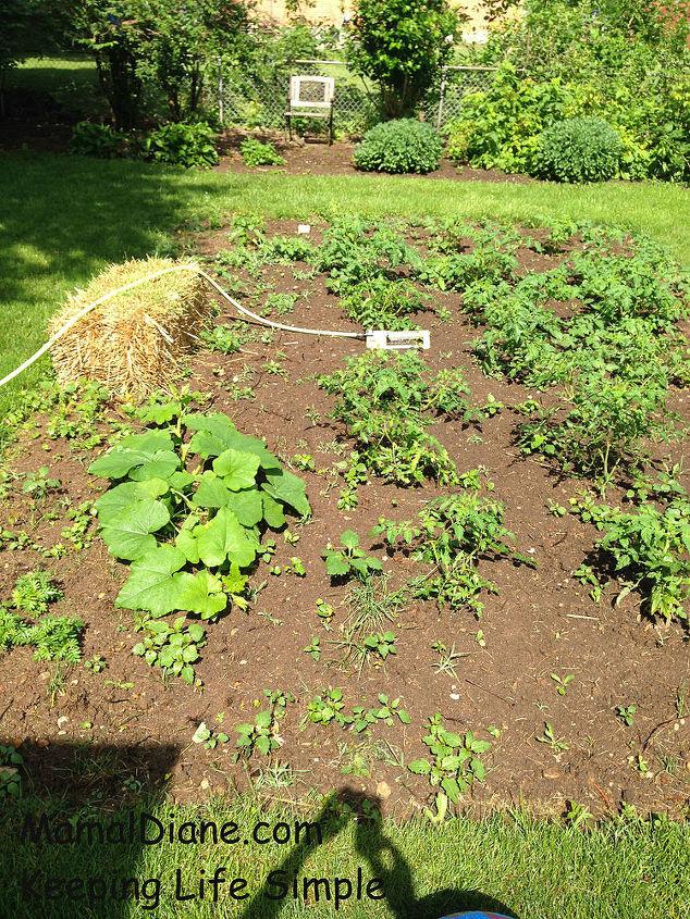 backyard gardening planted ohio, gardening