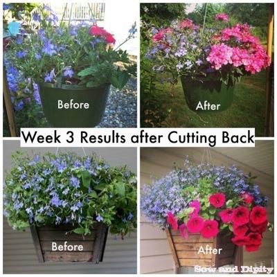 hanging baskets revival garden, container gardening, flowers, gardening