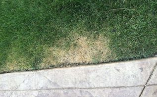 q what is happening to my lawn, landscape, lawn care