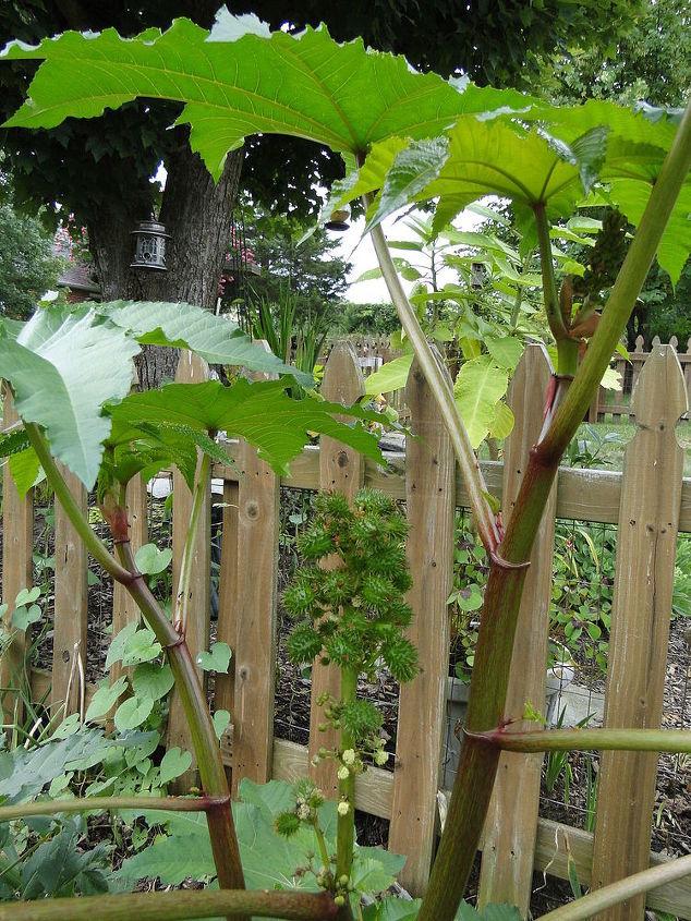 plant weed keep help, gardening