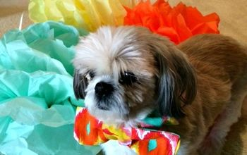 Easy DIY Bow Tie for Your Dog - for Those Special Occasions