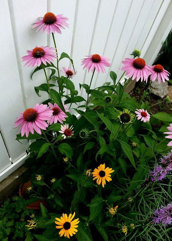 gardening in hypertufa planters ohio, container gardening, flowers, gardening