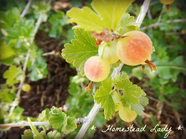 5 Fruits for the Children\'s Garden | Hometalk